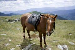 被备鞍的栗子马 免版税库存图片