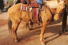 被备鞍的马季度 免版税库存图片