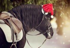 被备鞍的马的画象在一个盖帽的在一个红色圣诞老人帽子 免版税图库摄影