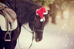 被备鞍的马的画象在一个盖帽的在一个红色圣诞老人帽子 库存图片