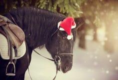 被备鞍的马的画象在一个盖帽的在一个红色圣诞老人帽子 免版税库存照片