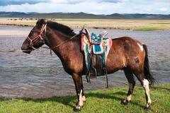 被备鞍的马蒙古语 免版税库存照片