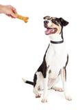 被奖励与款待的愉快的狗 免版税库存图片