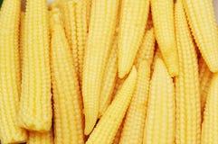 被安排的小玉米 免版税库存图片