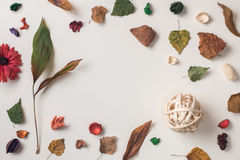 被安排的秋天植物射击  库存照片