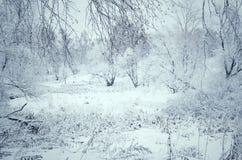 被定调子的冬天风景 库存照片