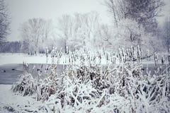被定调子的冬天风景 免版税库存照片