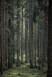 被定调子的和成为不饱和的森林或森林地图象 免版税图库摄影