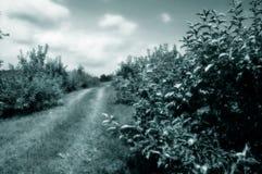 被定调子的苹果绿的果树园 免版税库存图片