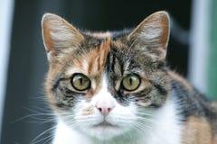 被察觉的猫 免版税库存图片