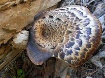 被察觉的蘑菇 免版税库存图片