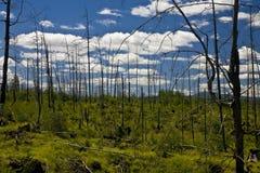 被射击的森林 免版税库存照片