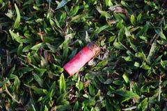 被射击的壳倒空红色射击枪项目符号弹药筒 免版税库存照片