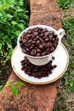 被射击的豆接近的咖啡 库存图片