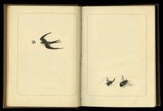 被开张的旧书 免版税库存照片