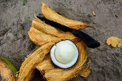 被开张的椰子 免版税图库摄影