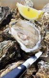 被开张的牡蛎 免版税库存图片