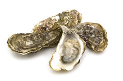 被开张的牡蛎 免版税库存照片