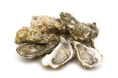 被开张的牡蛎 免版税图库摄影
