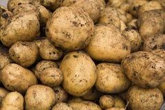 被开掘的新鲜的土豆 库存图片
