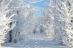 被弄脏的冬天风景 惊人的视图 图库摄影