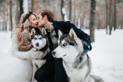 被弄脏的新娘和新郎在syberian爱斯基摩背景亲吻  户外婚姻冬天的新娘新郎 附庸风雅 免版税库存照片