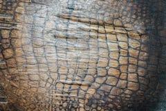 被弄脏的木头 免版税库存图片