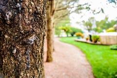 被弄脏的树干在焦点和庭院 免版税库存图片