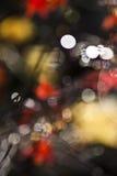 被弄脏的槭树现实 库存照片