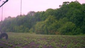 被弄脏的焦点,特别浇灌的枢轴洒水装置灌溉小绿色potatoe灌木,在土壤增长,在行 股票视频