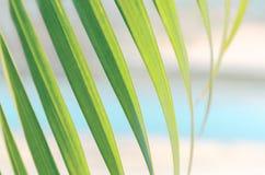 被弄脏的照片-棕榈树绿色叶子反对绿松石水和沙子,晴天背景的  库存图片