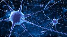 被弄脏的电池考试微观被挂接的神经神经元 库存图片