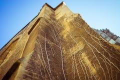 被弄脏的砂岩藤 免版税库存图片