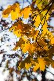被弄脏的秋叶在阳光下,抽象背景, bokeh,创作处理,选择聚焦 免版税图库摄影