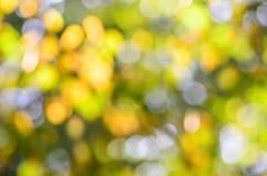 被弄脏的秋天自然背景 免版税库存图片