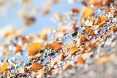 被弄脏的秋天闪耀的样式 图库摄影