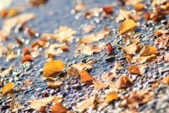 被弄脏的秋天闪耀的样式 免版税库存图片