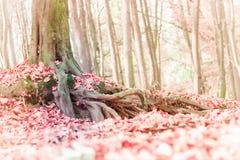 被弄脏的秋天风景背景 库存图片