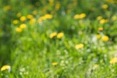 被弄脏的绿草和蒲公英背景 免版税库存图片