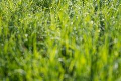 被弄脏的绿草背景 库存图片