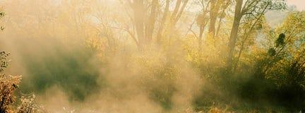 被弄脏的背景、秋天早晨薄雾和光束在后面 免版税库存照片