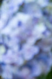 被弄脏的背景紫色 免版税库存照片