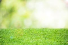 被弄脏的背景bokeh绿色自然摘要样式 图库摄影