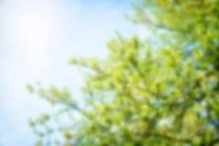 被弄脏的自然本底 反对蓝色清楚的天空的绿色叶子 r 太阳在云彩发光 库存图片