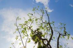 被弄脏的自然背景(查寻通过林冠层) 免版税库存照片