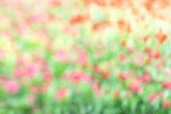 被弄脏的花桃红色绿色软性在庭院背景中 免版税库存照片