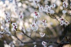 被弄脏的花,背景迷离 免版税库存图片