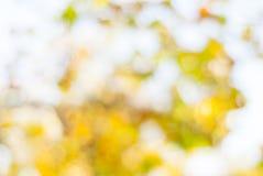 被弄脏的黄色秋天叶子 免版税库存照片