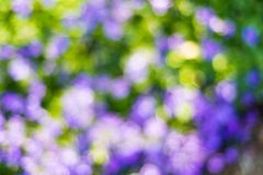 被弄脏的紫色花 免版税库存照片