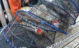 被引诱的斑点大虾陷井 免版税库存照片